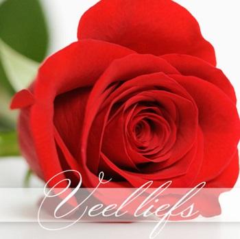 Spreuk roos